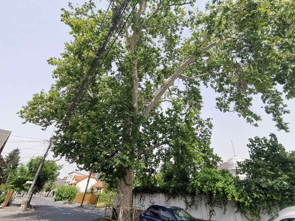 copac pomiculturii 1