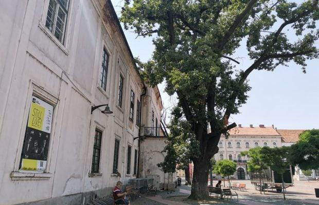 copaci garnizoana 1