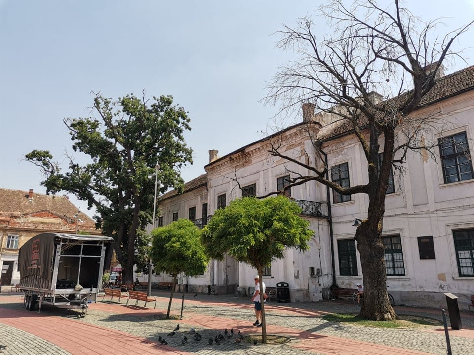 copaci garnizoana 5