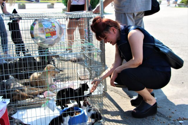 dogs center targ adoptii (2)