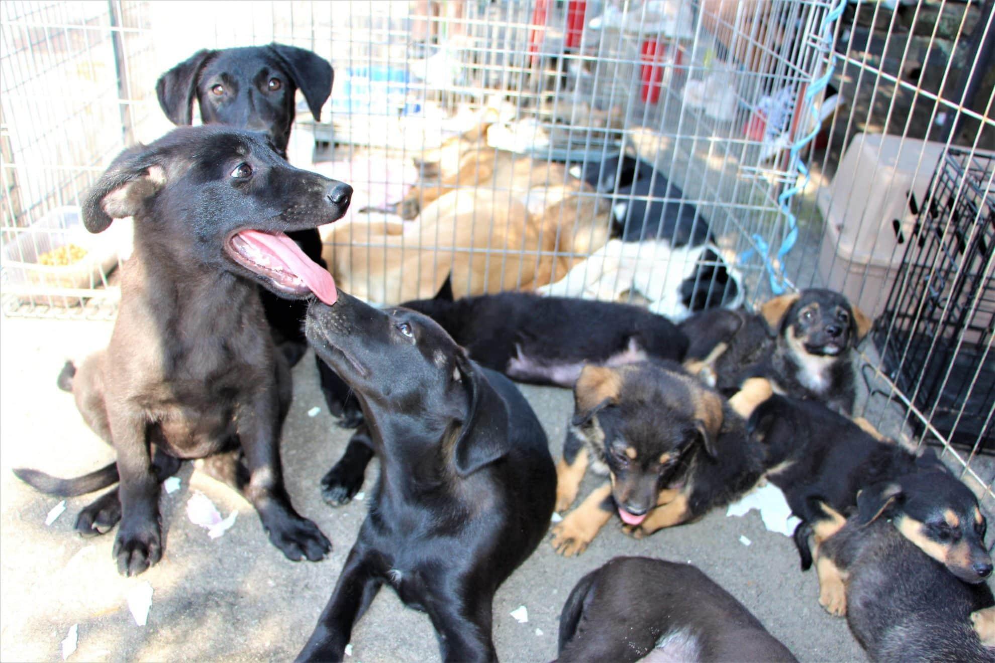 dogs center targ adoptii (4)