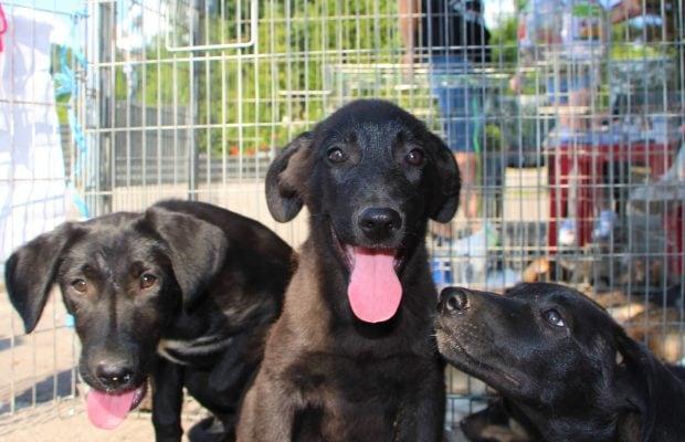 dogs center targ adoptii (5)