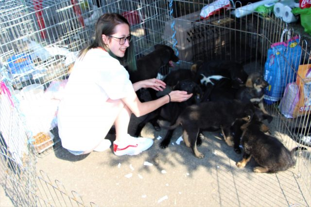 dogs center targ adoptii (6)