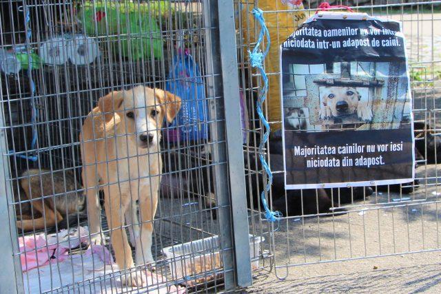 dogs center targ adoptii