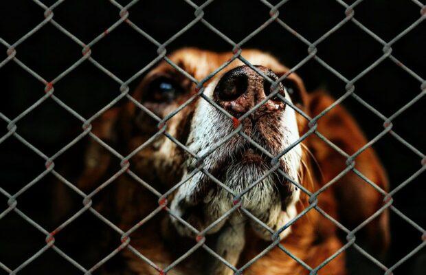 animal welfare 1116203 1280