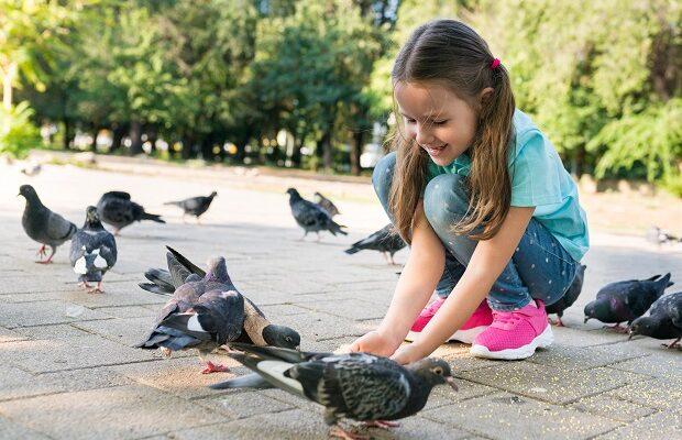 fetita porumbei