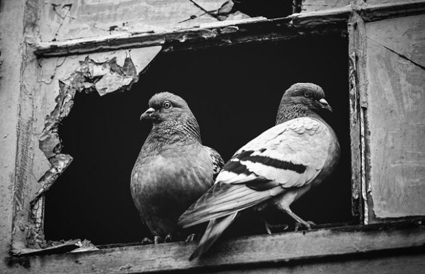 two pigeons sitting together in a broken window.